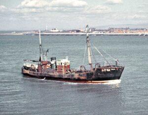 M.T. Willa LT43