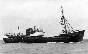 M.T. Dayspring H183